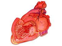Симптоми ішемічної хвороби серця