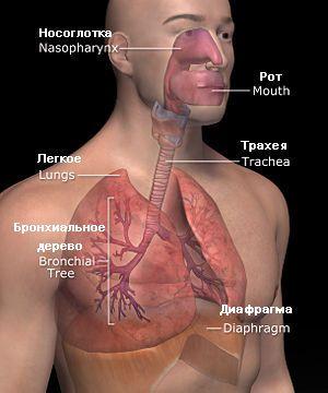 Хвороби системи органів дихання в тибетській медицині