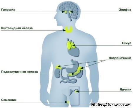 Що лікує лікар акушер гінеколог-ендокринолог? Поради фахівців