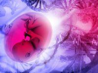 Плід всередині матки