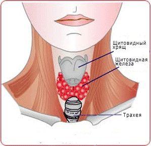 Що потрібно знати про симптоми щитовидки