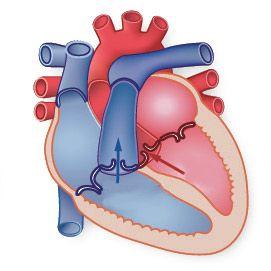 Дисфункція міокарда шлуночків серця: причини, симптоми, лікування