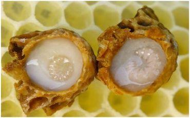 Їжте мед з маточним молочком. Він тонус підвищить, все буде пучком!