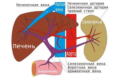 Флеботромбоз: глибоких вен нижніх кінцівок, поверхневих, гомілки, нижньої порожнистої вени