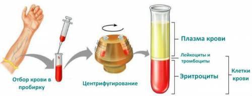 Визначення гематокриту крові