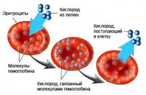 Гемоглобін при менструації 14
