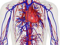 Найпоширеніші хвороби судин