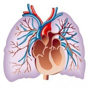 Гіпертензія легких: виникнення, ознаки, форми, діагностика, терапія