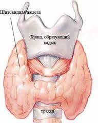 Гіпотиреоз щитовидки у дітей