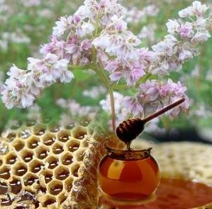 Гречаний мед підніме імунітет, здоровий чоловік - і застуди немає!