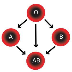 Група крові (ав0): суть, визначення у дитини, сумісність, на що впливає?