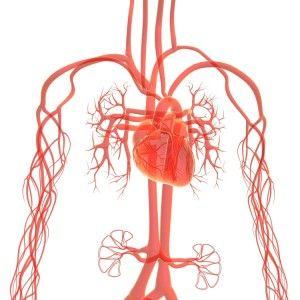 Звивистість судин хребта, шиї і мозку: причини, симптоми, лікування