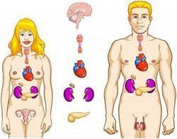 Ендокринні захворювання: симптоми і ознаки