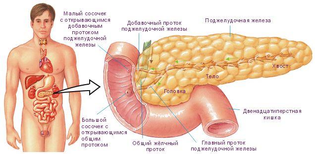 Основні симптоми проблем з підшлунковою залозою
