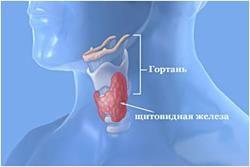 Які призначають препарати для лікування щитовидної залози у жінок