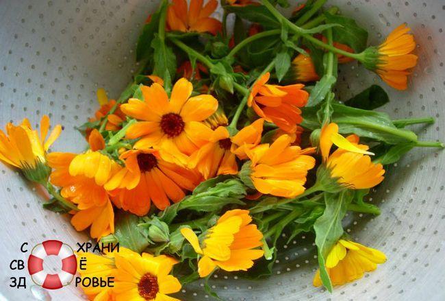 Календула і її квітки