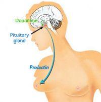 Способи зниження пролактину