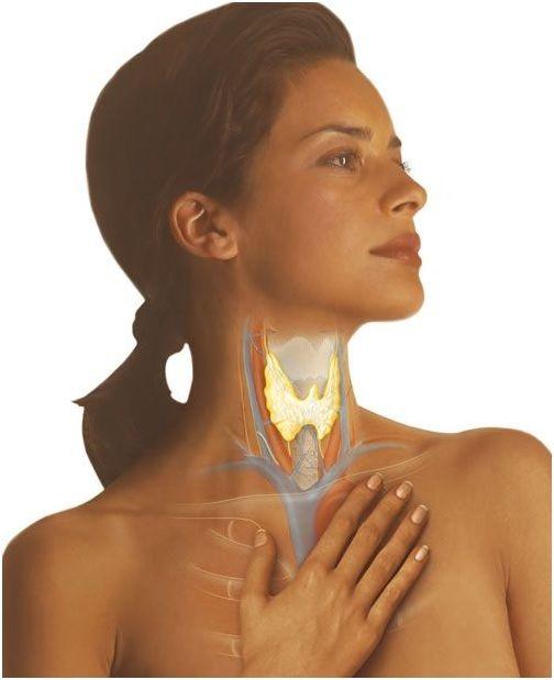 Розташування щитовидки