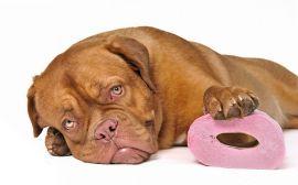 Лікуємо пронос у собак