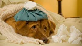 Проблеми з шлунково-кишкового тракту у собаки