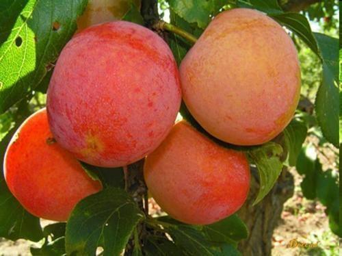 Лимонний сік - його користь в косметології і схудненні