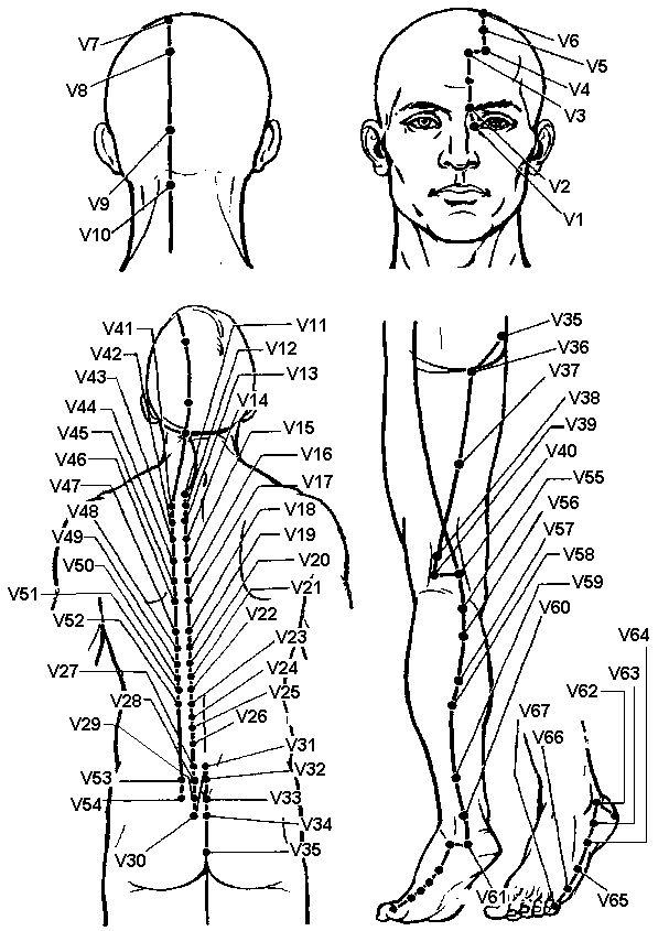 Меридіан сечового міхура (v)