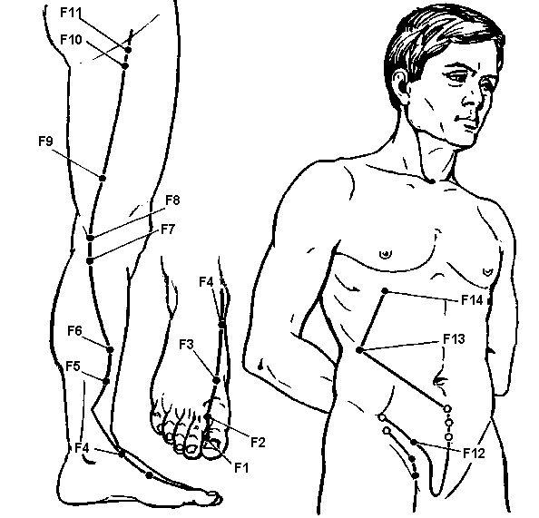 Меридіан печінки (f)