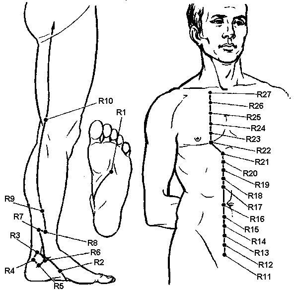 Акупунктурні точки меридіана нирок