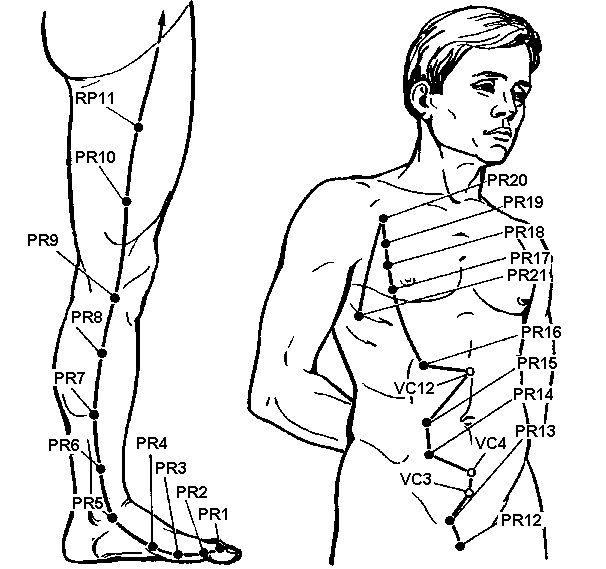 Меридіан селезінки і підшлункової залози (rp)
