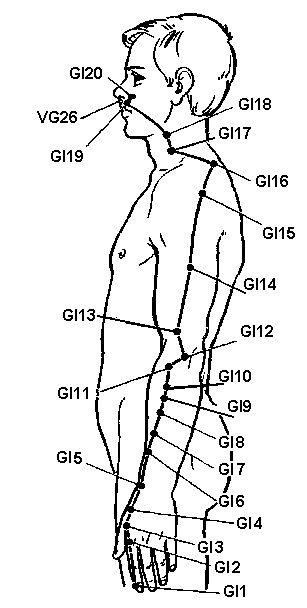 Меридіан товстого кишечника (gi)
