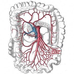 Мезотромбоз судин кишечника: причини, форми, перебіг, діагностика і терапія