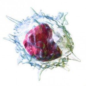 Моноцити: норми, причини підвищених і знижених, функції і здатності