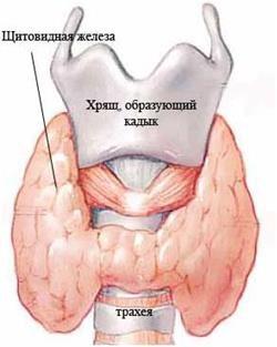 Недолік тіроідних гормонів щитовидної залози викликає системні порушення в роботі організму