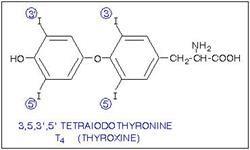Норма гормону т4 вільний в крові у жінок