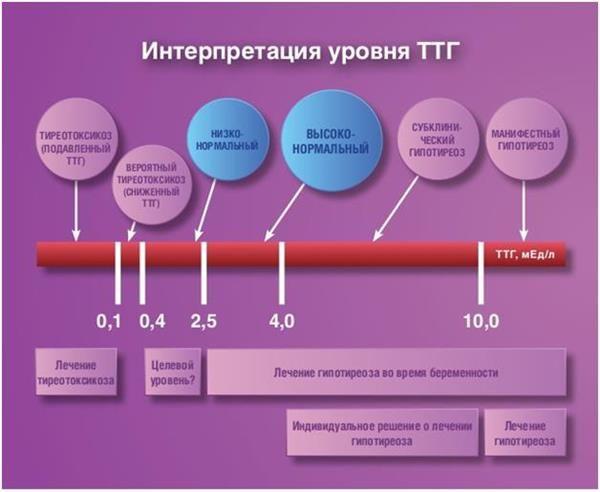 Інтерпретація рівня ТТГ