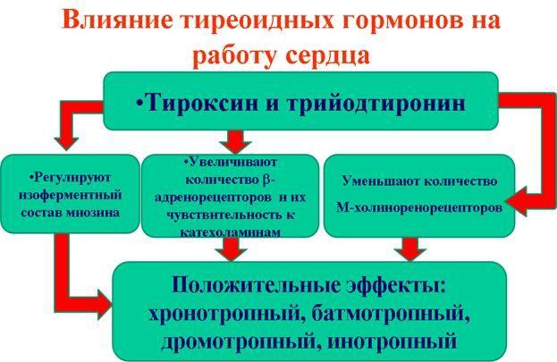 схема впливу гормонів