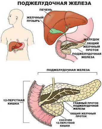 Про ознаки захворювання нашої підшлункової залози