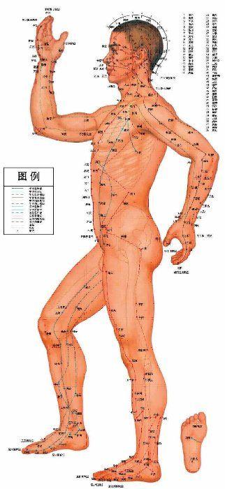 Меридіани в традиційній китайській медицині