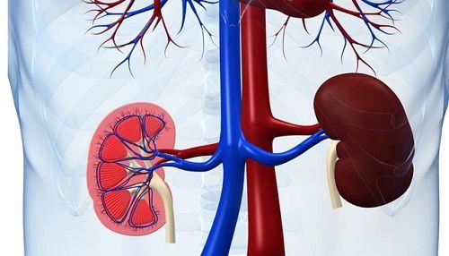 Як проявляються захворювання нирок