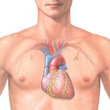 Пересадка серця: суть і реальність операції, показання, проведення, прогноз