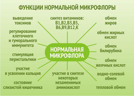 функції мікрофлори