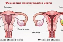 Фізіологія менструального циклу