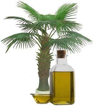 Корисні і шкідливі властивості пальмового масла