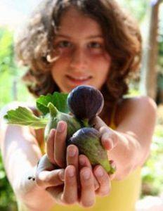 Корисні властивості інжиру для жінок. Смачна і корисна смоківниця для краси і здоров`я