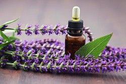 Корисні властивості ефірного масла шавлії