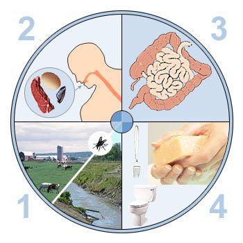 Причини і лікування гастроентериту у дітей