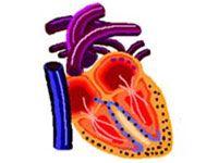 Рестриктивні кардіоміопатії і особливості їх лікування