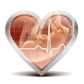 Серцебиття плоду: коли з`являється і як можна почути, норма і порушення