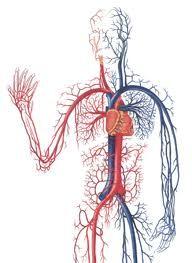 Серцево-судинні захворювання в тибетській медицині