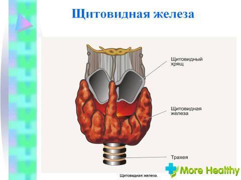 Щитовидна залоза 1 ступеня